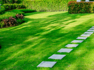 Lawn Care in Wendell or Zebulon